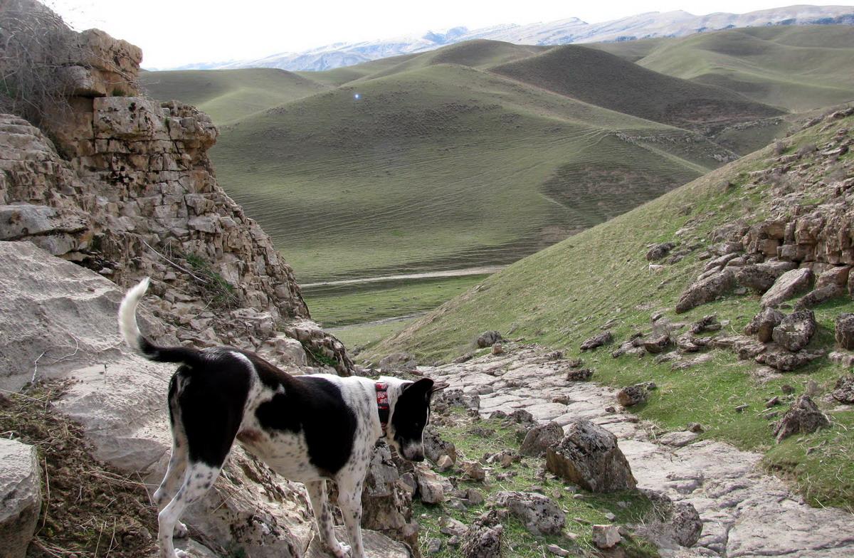 Nature, Turkmenistan (8)