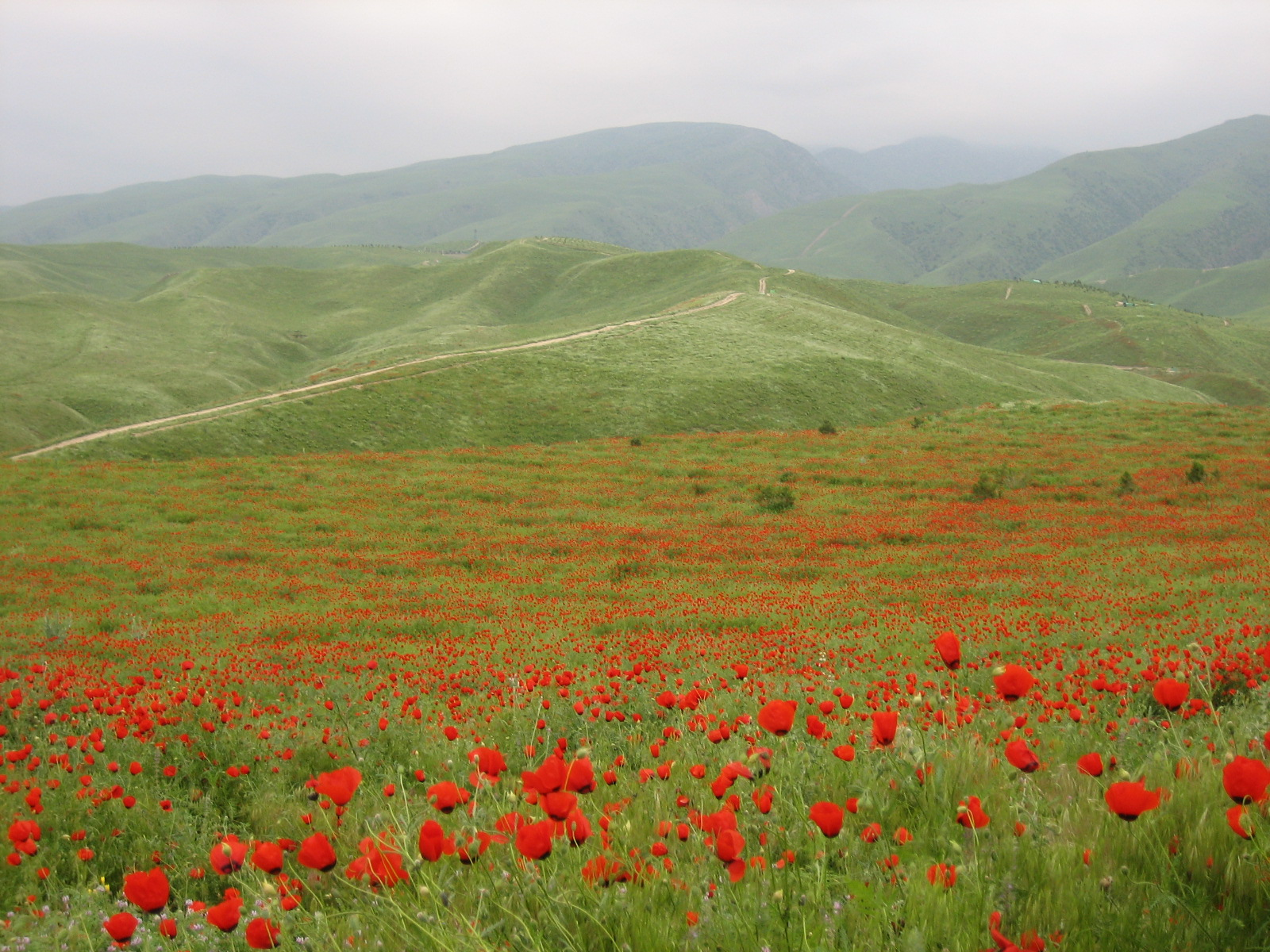 Nature Images 2mb: Photos Of Turkmenistan By DN Tours