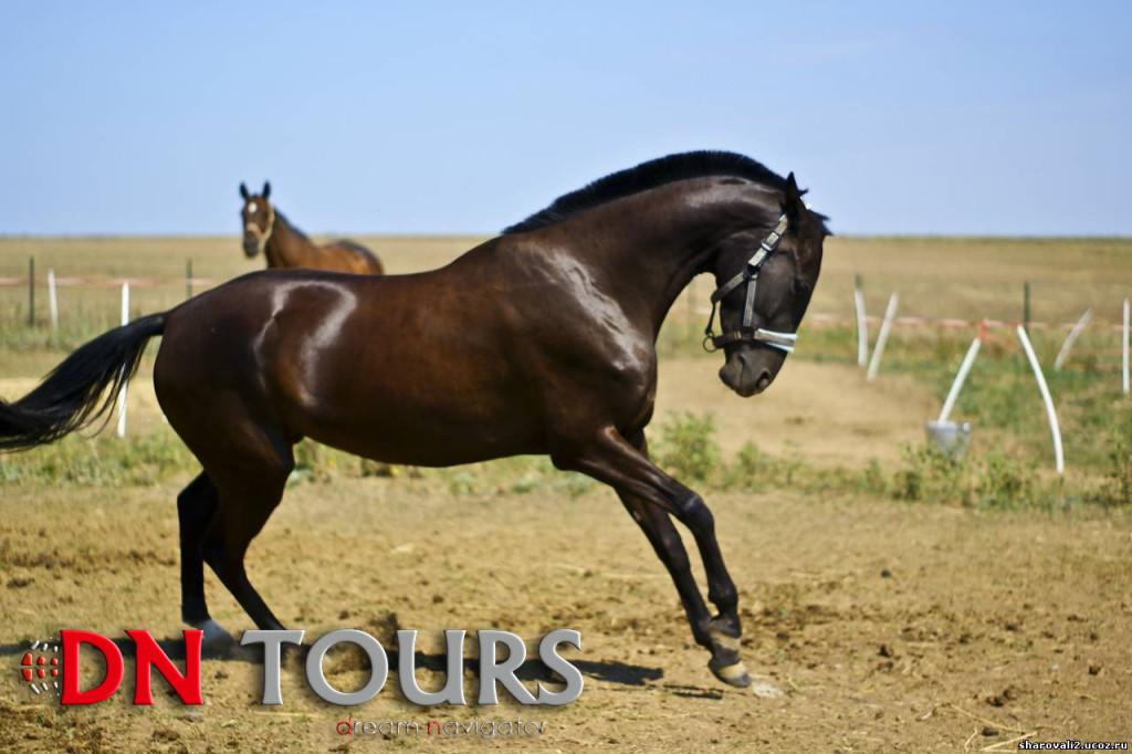 Ahal-Teke-Horse Tour to Turkmenistan