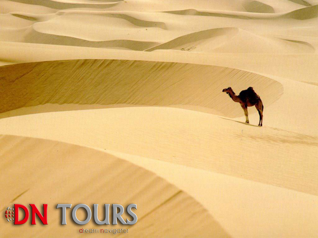 Karakum Desert, Camels, Turkmenistan