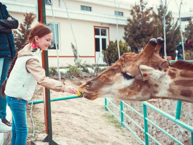 Ashgabat zoo